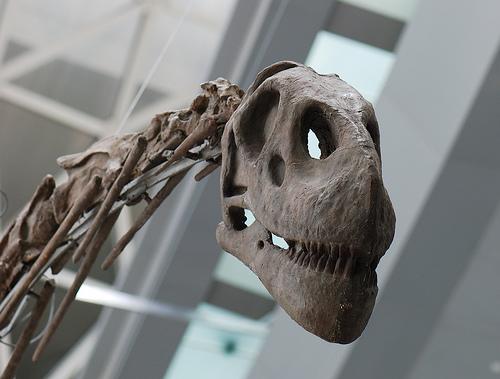 largest dinosaur ever